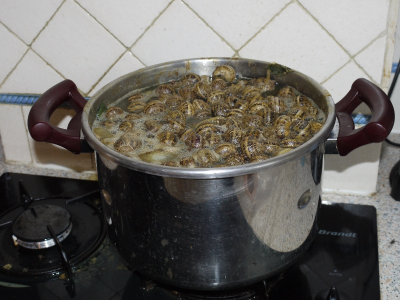cuisson des escargots petit gris coussin pour banquette ext rieure. Black Bedroom Furniture Sets. Home Design Ideas